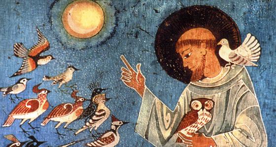 Capuchinos, San Francisco de Asís, ecología franciscana, Laudato Si